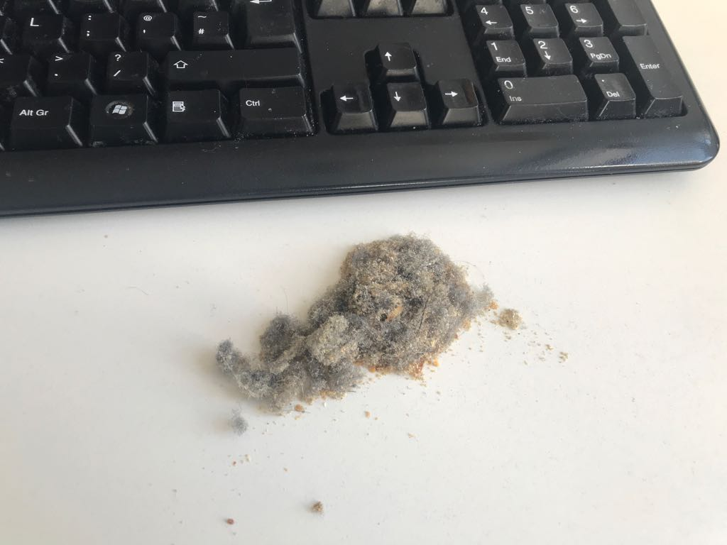 Dirt extracted from keyboard